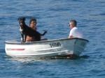 Canine skipper