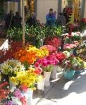 Palermo flowers