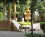 Vietnamese/Cambodian border