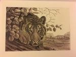 The elusive tigers of Ranthambhore