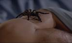 Tarantula scene