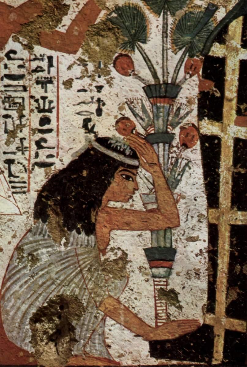 egyptian widow